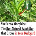 natural-painkiller01